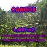 Tanah dijual di Canggu Bali 18 Are di canggu brawa