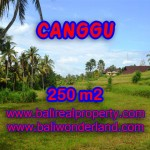 Tanah di Canggu Bali dijual 2,5 are di Canggu Pererenan