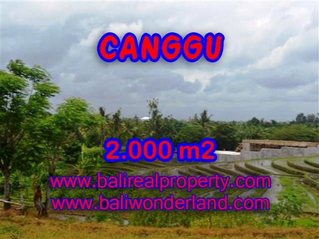 TANAH DIJUAL DI CANGGU CUMA RP 4.750.000 / M2
