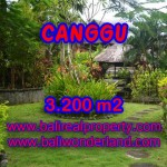 TANAH MURAH DIJUAL DI CANGGU BALI TJCG129 - PELUANG INVESTASI PROPERTY DI BALI