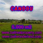 DIJUAL MURAH TANAH DI CANGGU TJCG132 - INVESTASI PROPERTY DI BALI