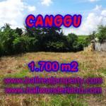 JUAL TANAH DI CANGGU MURAH TJCG143