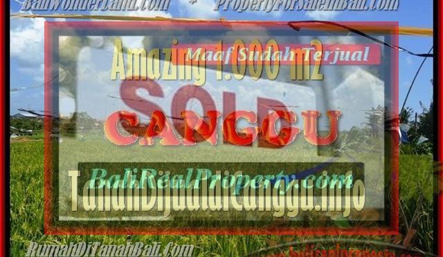 JUAL MURAH TANAH di CANGGU BALI 1.000 m2 View Sawah, lingkungan villa