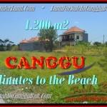 INVESTASI PROPERTY, TANAH MURAH di CANGGU BALI DIJUAL TJCG166