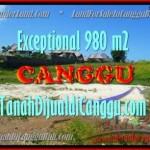TANAH MURAH di CANGGU BALI DIJUAL TJCG152