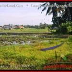 TANAH MURAH di CANGGU BALI DIJUAL 1,000 m2 di Canggu Kayutulang