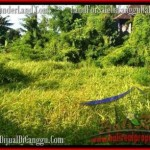 TANAH MURAH di CANGGU JUAL 10 Are View sawah link villa