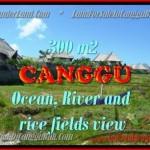 INVESTASI PROPERTY, TANAH MURAH di CANGGU DIJUAL TJCG152