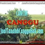TANAH DIJUAL di CANGGU BALI 17 Are di Canggu Pererenan