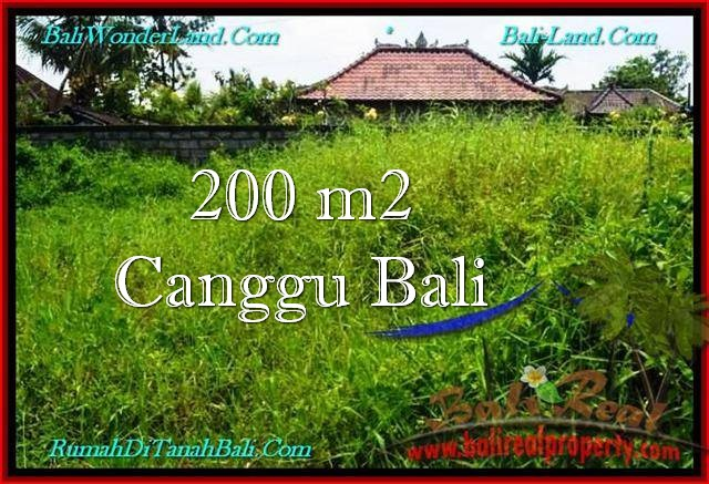 DIJUAL MURAH TANAH di CANGGU 2 Are di Canggu Pererenan