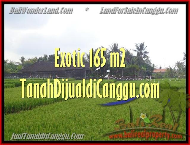 DIJUAL MURAH TANAH di CANGGU 1.650 m2 di Canggu Cemagi