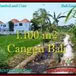 JUAL TANAH MURAH di CANGGU 11 Are View sawah, lingkungan villa