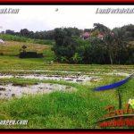 TANAH di CANGGU JUAL 1,500 m2 View sawah dekat Pantai
