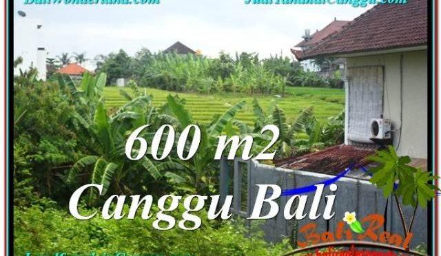 TANAH MURAH di CANGGU BALI 600 m2 di Canggu Brawa