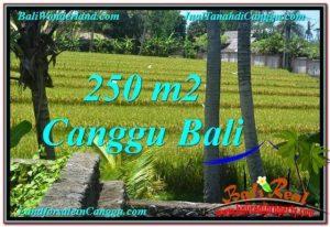 TANAH di CANGGU BALI DIJUAL 2.5 Are View sawah lingkungan villa