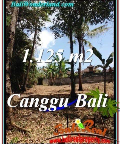 TANAH MURAH di CANGGU 11.25 Are di Canggu Pererenan