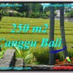 TANAH JUAL MURAH CANGGU BALI 250 m2 View sawah lingkungan villa