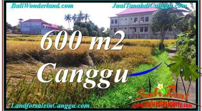 TANAH di CANGGU BALI DIJUAL 6 Are di Canggu Pererenan