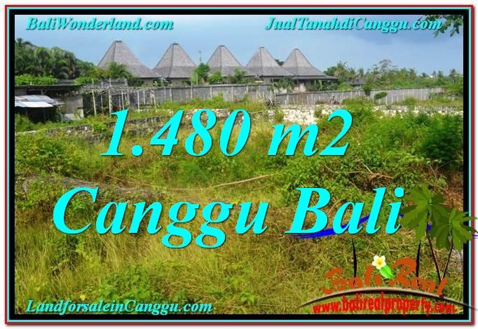 TANAH MURAH di CANGGU 14.8 Are di Canggu Pererenan