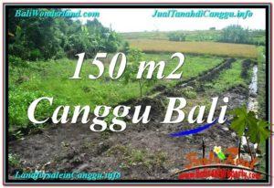 TANAH MURAH di CANGGU 1.5 Are di Canggu Pererenan