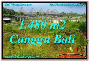 JUAL MURAH TANAH di CANGGU BALI 1,480 m2 di Canggu Pererenan