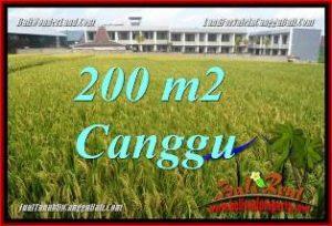 JUAL TANAH di CANGGU 2 Are VIEW SAWAH, LINGKUNGAN VILLA